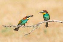 Pájaros brillantes en rama sobre fondo crema - foto de stock