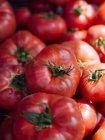 Куча спелых красных свежий взял помидоры — стоковое фото