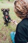 Grand chien brun jouant donnant la patte au propriétaire en forêt — Photo de stock