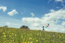 Вид сбоку мальчика, ходить на Уайлдфлауэр луга с воздушными шарами — стоковое фото