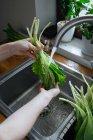 Weibliche Hände waschen frischen grünen Salat in Spülbecken — Stockfoto