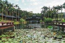 Estanque en el parque con las almohadillas de lirio de agua y edificio oriental en el fondo, Nanning, China - foto de stock