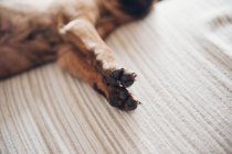 Лапи неправдивими коричневий маленьке цуценя — стокове фото