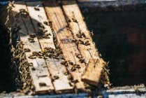 Closeup of honeybee swarm working in hive — Stock Photo