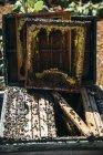 Primer plano de la recogida de miel orgánica de panal - foto de stock