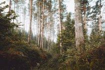 Ruhige grüne malerische Wälder bei Tageslicht — Stockfoto