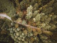 Vue aérienne de la route rurale asphaltée dans les bois verts — Photo de stock