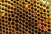 Gros plan de fond en nid d'abeille doré biologique — Photo de stock