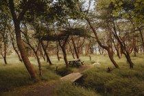 Weg und Holztisch malerisch im grünen Park — Stockfoto