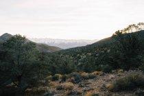 Arbres verts et buissons couvrant les hauts plateaux rocheux avec vue sur les montagnes sur le fond — Photo de stock
