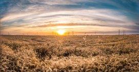 Coucher de soleil dans un ciel nuageux au-dessus d'un champ tranquille — Photo de stock