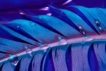 Капли пресной воды на мокрое птичье перо при фиолетовом освещении — стоковое фото