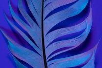 Texture of bird feather in violet illumination — Stock Photo