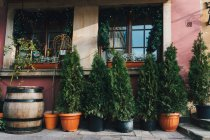 Pines in pots, decorated exterior of house for Christmas with garlands and lights on windows — Stock Photo