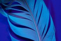Detail of bird feather in violet illumination — Stock Photo