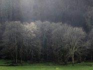 Ландшафт голых деревьев на зеленом поле в солнечный свет — стоковое фото
