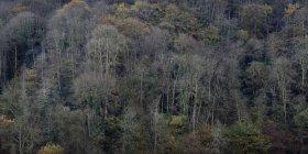Laublose Bäume am Berghang in der Herbstsonne — Stockfoto