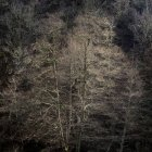 Bare trees growing on slope of mountain in calm light — Stock Photo
