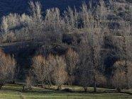 Kahle Bäume wachsen in ruhigem Licht auf Hügel und Feld — Stockfoto