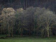 Осенний пейзаж голых деревьев на зеленом поле под солнцем — стоковое фото