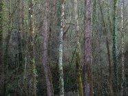 Paesaggio di alberi senza foglie nella foresta tranquilla nella stagione fredda — Foto stock