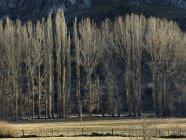 Kahle Bäume, die im Sonnenlicht auf einem Feld wachsen — Stockfoto