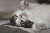 Очаровательный котенок смотрит в камеру, лежа дома на мягкой кровати — стоковое фото