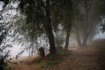 Footpath with fallen leaves near trees in fog — Stock Photo