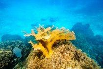 Grandes corales en el agua con gente buceando en el fondo - foto de stock