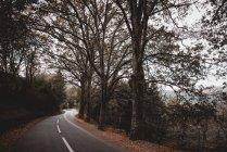 Vista a la carretera con trazas de luz de coche en larga exposición en bosques de otoño - foto de stock