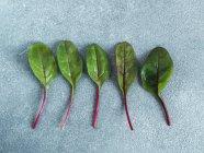 Мангольд свіжий зелений листя в рядок на сірий камінь фон — стокове фото
