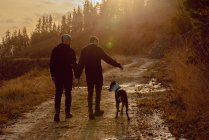 Visão traseira do casal homossexual de mãos dadas e andando com o cão no caminho na colina no dia ensolarado — Fotografia de Stock