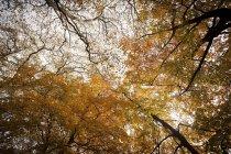 Feuillage jaune des arbres dans le parc d'automne — Photo de stock