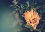 Flor amarilla creciendo en el jardín sobre fondo borroso - foto de stock