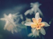 Flor blanca creciendo en el jardín sobre fondo borroso - foto de stock