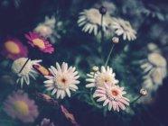 Primer plano de flores de colores que crecen en el jardín - foto de stock
