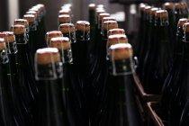 Rows of wine bottles on transporter belt — Stock Photo