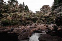 Ciel nuageux au-dessus du lac avec rivage rocheux et arbres verts — Photo de stock