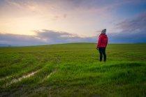 Vue arrière de la personne vêtue debout sur un champ vert au coucher du soleil, Italie — Photo de stock