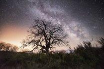 Árbol desnudo seco creciendo en el paisaje salvaje bajo el cielo nocturno brillante con la Vía Láctea - foto de stock
