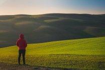 Visão traseira da pessoa de jaqueta em pé no campo verde ao pôr do sol, Itália — Fotografia de Stock