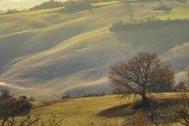 Paysage majestueux de vallée verte avec des champs et des collines en Toscane, Italie — Photo de stock