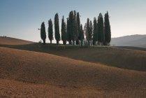 Paisaje de arboleda de cipreses verdes en campo vacío remoto, Italia - foto de stock