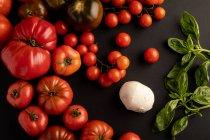 Tomates vermelhos maduros e folhas da manjericão para a salada no fundo preto perto do queijo fresco do mozzarella — Fotografia de Stock