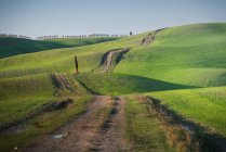 Panoramic view of endless green fields and rural road with cypress growing in barrel on background, Italy — Stock Photo