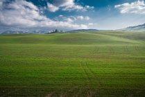 Vista panorámica de campos verdes sin fin en la luz del sol brillante, Italia - foto de stock