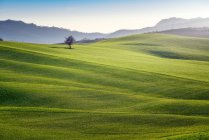 Panoramic view of endless green fields in bright sunlight, Italy — Stock Photo
