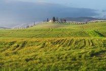 Живописный пейзаж зеленых полей с коттеджем и деревьями на закате, Италия — стоковое фото