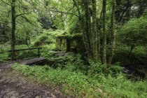 Old water mill in forest, wooden bridge over stream — Stock Photo