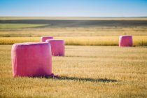 Cereal bales wrapped with pink plastic, campaign against breast cancer — Stock Photo